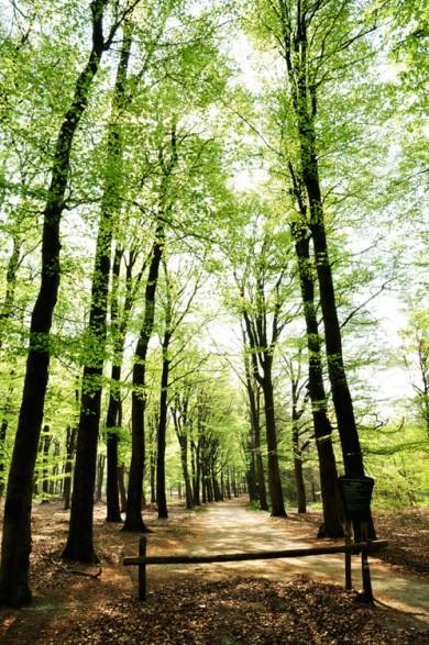 bomen-bos-susanne-sterkenburg