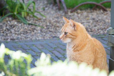 kat-utrecht-susanne-sterkenburg
