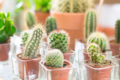 cactussen-susanne-sterkenburg